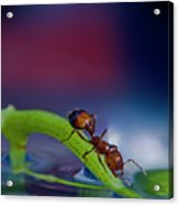 Ant In A Colorful World Acrylic Print
