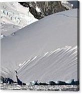 Antarctic Bliss  Acrylic Print