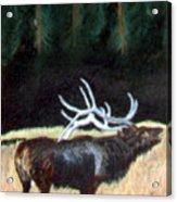 Antelope Calling Acrylic Print