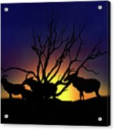 Antelope Crossing Acrylic Print