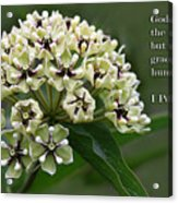 Antelope Horns Wildflower With Scripture Acrylic Print