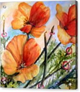 Antelope Valley Poppy Fields Acrylic Print