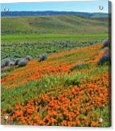 Antelope Valley Poppy Reserve Acrylic Print