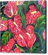 Anthurium Flowers Acrylic Print