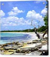 Antigua Shoreline Acrylic Print