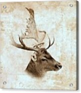 Antique Deer Acrylic Print