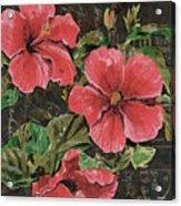 Antique Hibiscus Black 2 Acrylic Print