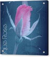 Antique Rose 3 Acrylic Print