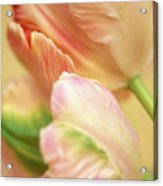 Antique Tulips Acrylic Print