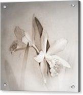 Antique White Orchids Acrylic Print