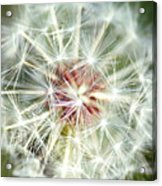 Anything Is Beautiful In The Right Context Acrylic Print