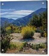Anza-borrego Desert State Park Desert Flowers Acrylic Print