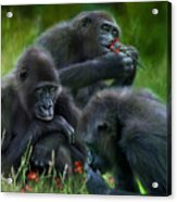 Ape Moods Acrylic Print