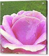 Aphrodite's Rose Acrylic Print