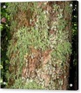Appalachian Arbor Flora Acrylic Print
