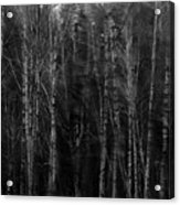 Apparition Acrylic Print