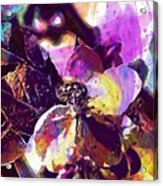 Apple Beetles Flowers Pollinating  Acrylic Print