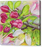 Apple Blossom Buds On A Greeting Card Acrylic Print