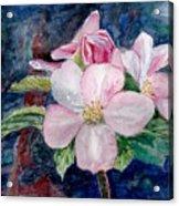 Apple Blossom - Painting Acrylic Print