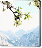 Apple Blossoms And Mountains Acrylic Print