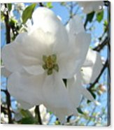 Apple Blossoms Art Prints Canvas Spring Tree Blossom Baslee Troutman Acrylic Print