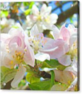 Apple Blossoms Art Prints Spring Trees Baslee Troutman Acrylic Print