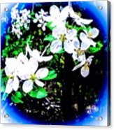 Apple Blossoms In Blue White Mist Acrylic Print