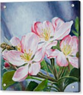 Apple Blossoms With Honeybee Acrylic Print