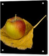 Apple Harvest Autumn Leaf Acrylic Print