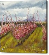 Apple Hill Springtime Acrylic Print