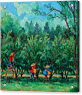 Apple Pickers  Littletree Orchard  Ithaca Ny Acrylic Print