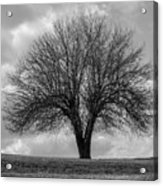 Apple Tree Bw Acrylic Print
