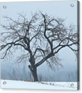 Apple Tree In Winter Fog Acrylic Print