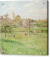 Apple Trees At Gragny Acrylic Print by Camille Pissarro