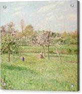 Apple Trees At Gragny Acrylic Print