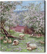 Appleblossom Acrylic Print by William Biscombe Gardner