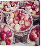 Apples Acrylic Print