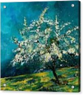 Appletree In Spring Acrylic Print