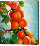 Apricots In The Garden Acrylic Print