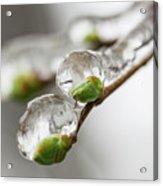 April Ice Storm 5 Acrylic Print
