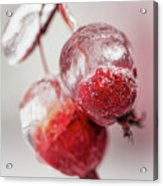 April Ice Storm Apples Acrylic Print