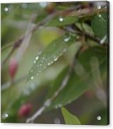 April Showers 1 Acrylic Print