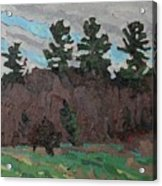 April White Pine Forest Acrylic Print