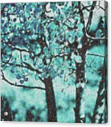 Aqua Aspens Acrylic Print