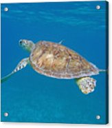 Aqua Glider Acrylic Print