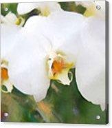 Aqua Lilies Acrylic Print