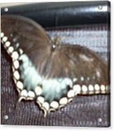 Aqua Wings Acrylic Print