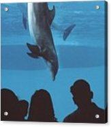 Aquarium Dolphin Acrylic Print