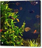 Aquarium Fish And Plants In Zoo Acrylic Print