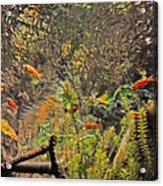 Aquarium Reflections Acrylic Print